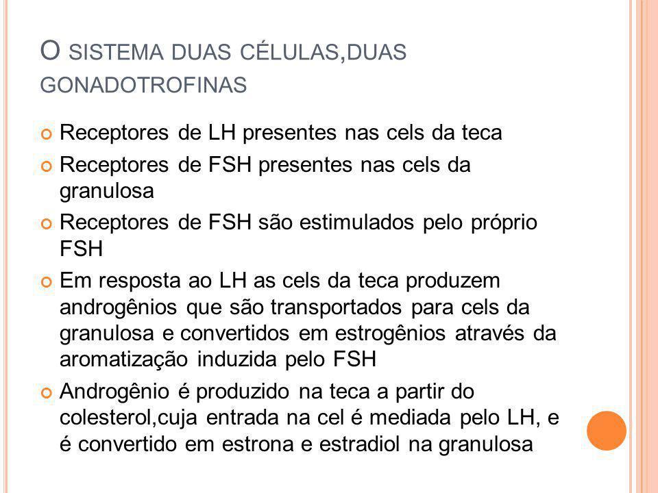 O SISTEMA DUAS CÉLULAS, DUAS GONADOTROFINAS Receptores de LH presentes nas cels da teca Receptores de FSH presentes nas cels da granulosa Receptores d