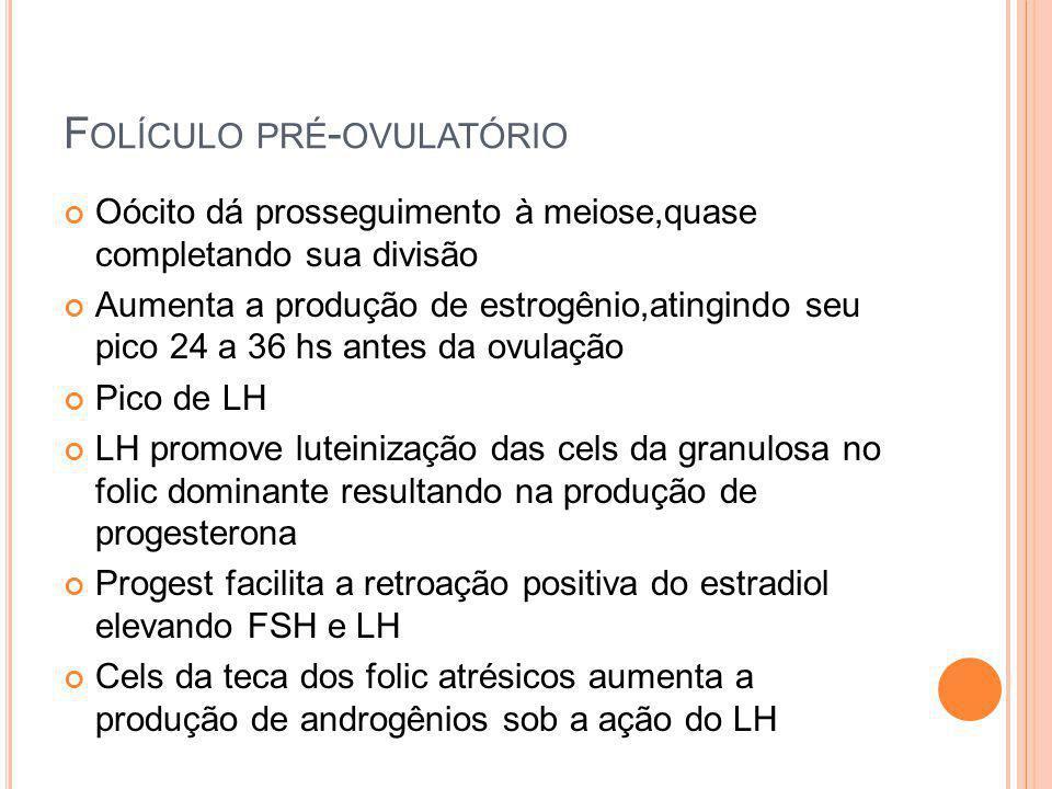 F OLÍCULO PRÉ - OVULATÓRIO Oócito dá prosseguimento à meiose,quase completando sua divisão Aumenta a produção de estrogênio,atingindo seu pico 24 a 36