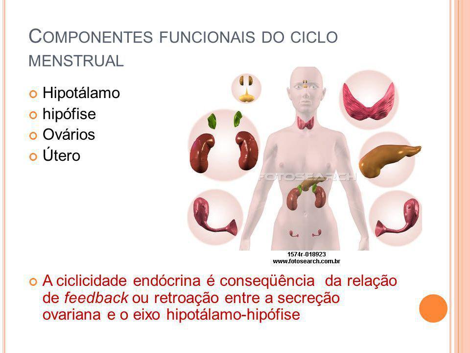 C OMPONENTES FUNCIONAIS DO CICLO MENSTRUAL Hipotálamo hipófise Ovários Útero A ciclicidade endócrina é conseqüência da relação de feedback ou retroaçã