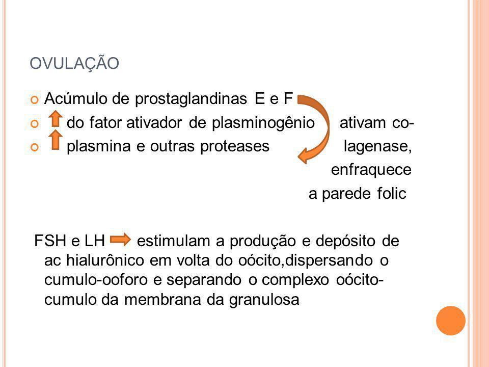 OVULAÇÃO Acúmulo de prostaglandinas E e F do fator ativador de plasminogênio ativam co- plasmina e outras proteases lagenase, enfraquece a parede foli