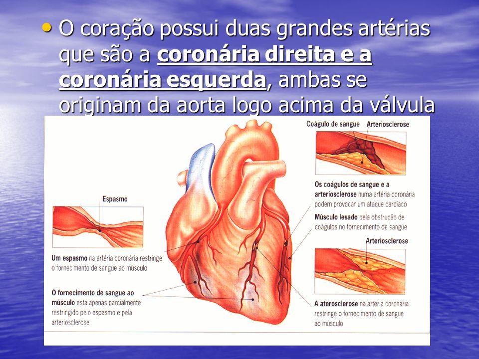 • O coração possui duas grandes artérias que são a coronária direita e a coronária esquerda, ambas se originam da aorta logo acima da válvula aórtica.