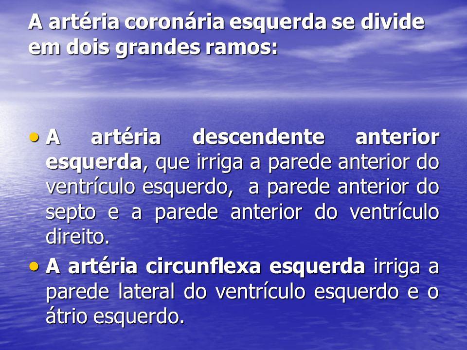 A artéria coronária esquerda se divide em dois grandes ramos:  A artéria descendente anterior esquerda, que irriga a parede anterior do ventrículo esquerdo, a parede anterior do septo e a parede anterior do ventrículo direito.