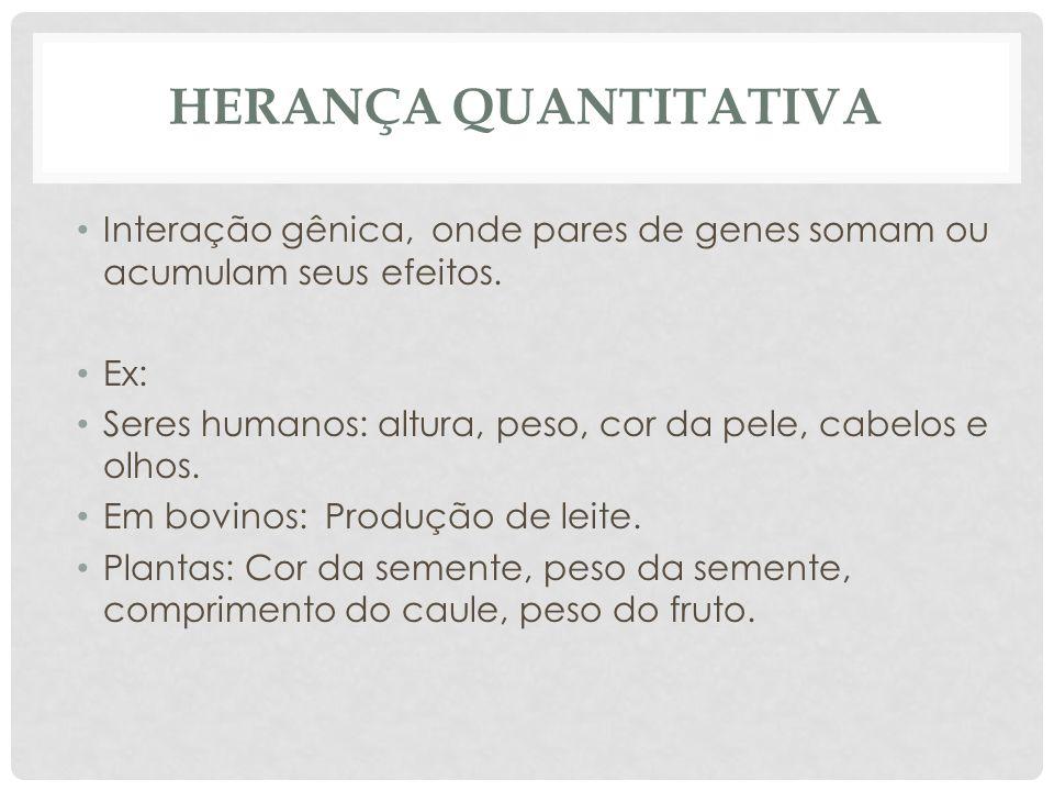 HERANÇA QUANTITATIVA • Interação gênica, onde pares de genes somam ou acumulam seus efeitos. • Ex: • Seres humanos: altura, peso, cor da pele, cabelos