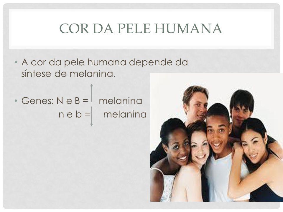 COR DA PELE HUMANA • A cor da pele humana depende da síntese de melanina. • Genes: N e B = melanina n e b = melanina