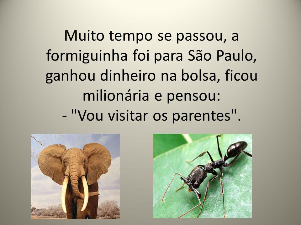 Muito tempo se passou, a formiguinha foi para São Paulo, ganhou dinheiro na bolsa, ficou milionária e pensou: -
