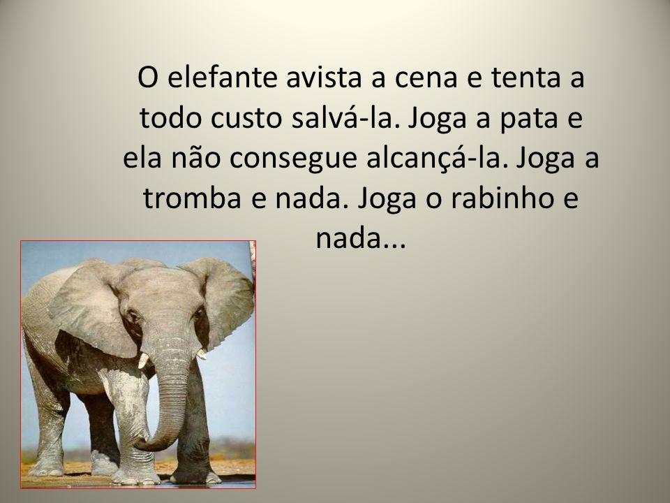 O elefante avista a cena e tenta a todo custo salvá-la. Joga a pata e ela não consegue alcançá-la. Joga a tromba e nada. Joga o rabinho e nada...