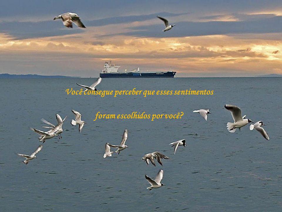 Mude seu destino...seja o comandante de sua nau. Escolha o melhor caminha para sua viagem .