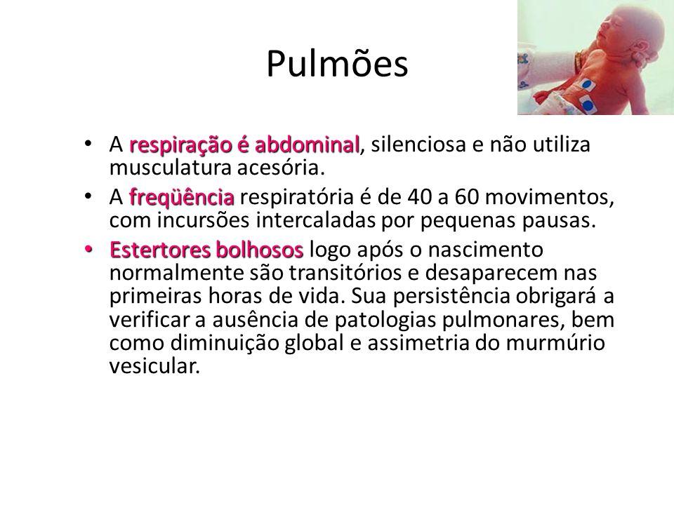 Pulmões respiração é abdominal • A respiração é abdominal, silenciosa e não utiliza musculatura acesória. freqüência • A freqüência respiratória é de