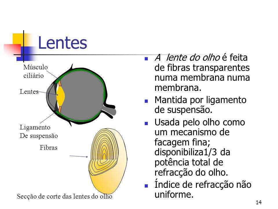 13 Iris e Pupila  A íris colorida controla o tamanho da abertura (pupila) onde entra a luz.