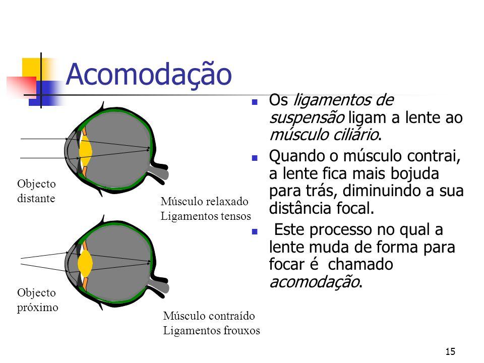14 Lentes  A lente do olho é feita de fibras transparentes numa membrana numa membrana.