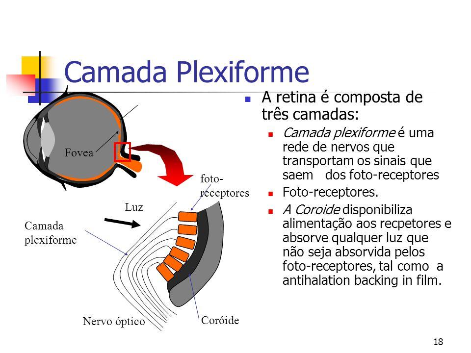 17 Retina  A Retina é o detector fotosensitivo para o olho.