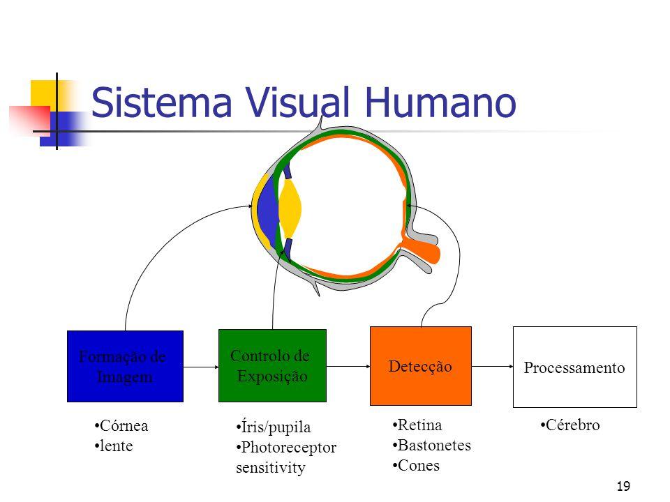 18 Camada Plexiforme  A retina é composta de três camadas:  Camada plexiforme é uma rede de nervos que transportam os sinais que saem dos foto-receptores  Foto-receptores.