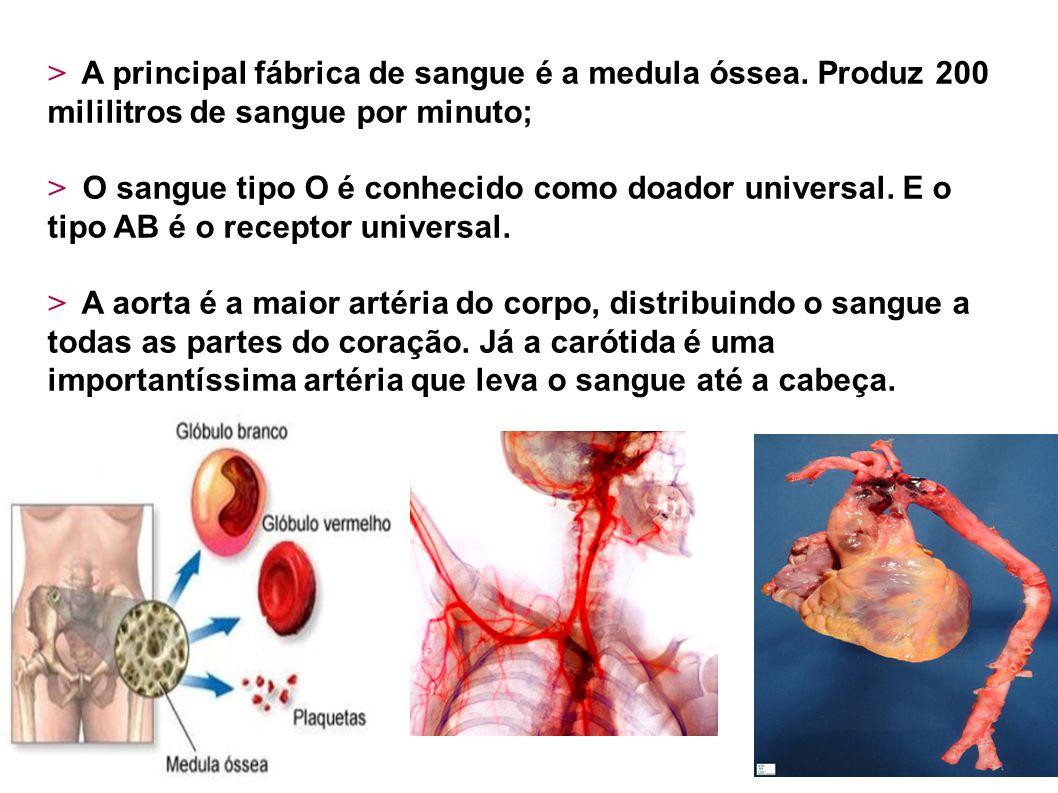 > A principal fábrica de sangue é a medula óssea. Produz 200 mililitros de sangue por minuto; > O sangue tipo O é conhecido como doador universal. E o