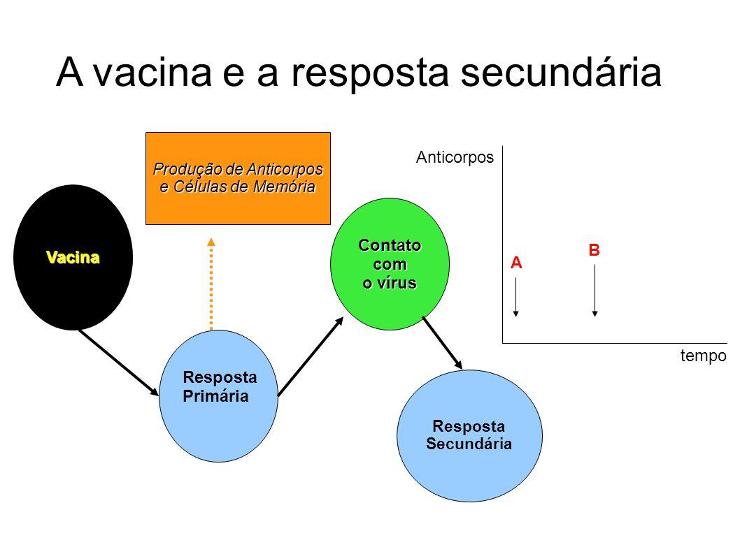 A vacina e a resposta secundária Vacina Resposta Primária Contato com o vírus Resposta Secundária Produção de Anticorpos e Células de Memória A B temp