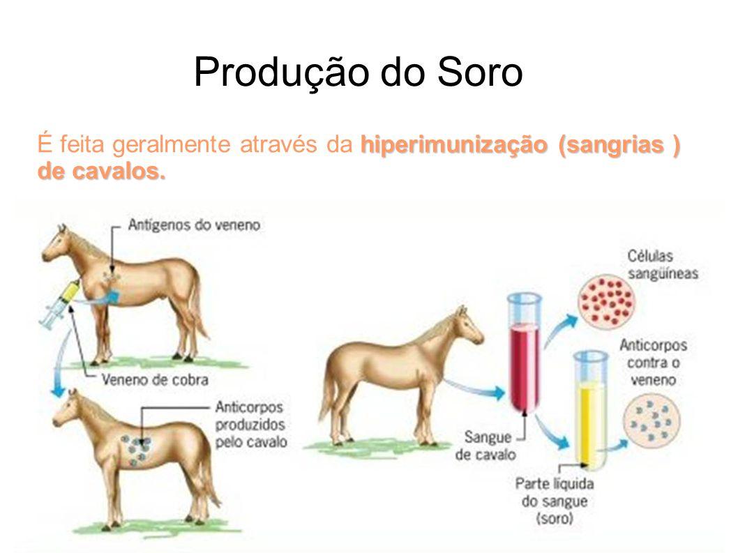 Produção do Soro. hiperimunização (sangrias ) de cavalos. É feita geralmente através da hiperimunização (sangrias ) de cavalos.