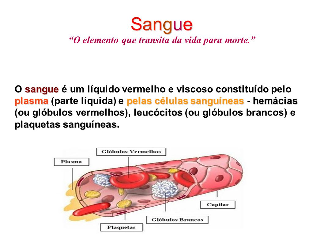 """Sangue Sangue """"O elemento que transita da vida para morte."""" sangue plasmapelas células sanguíneas hemácias leucócitos plaquetas sanguíneas O sangue é"""