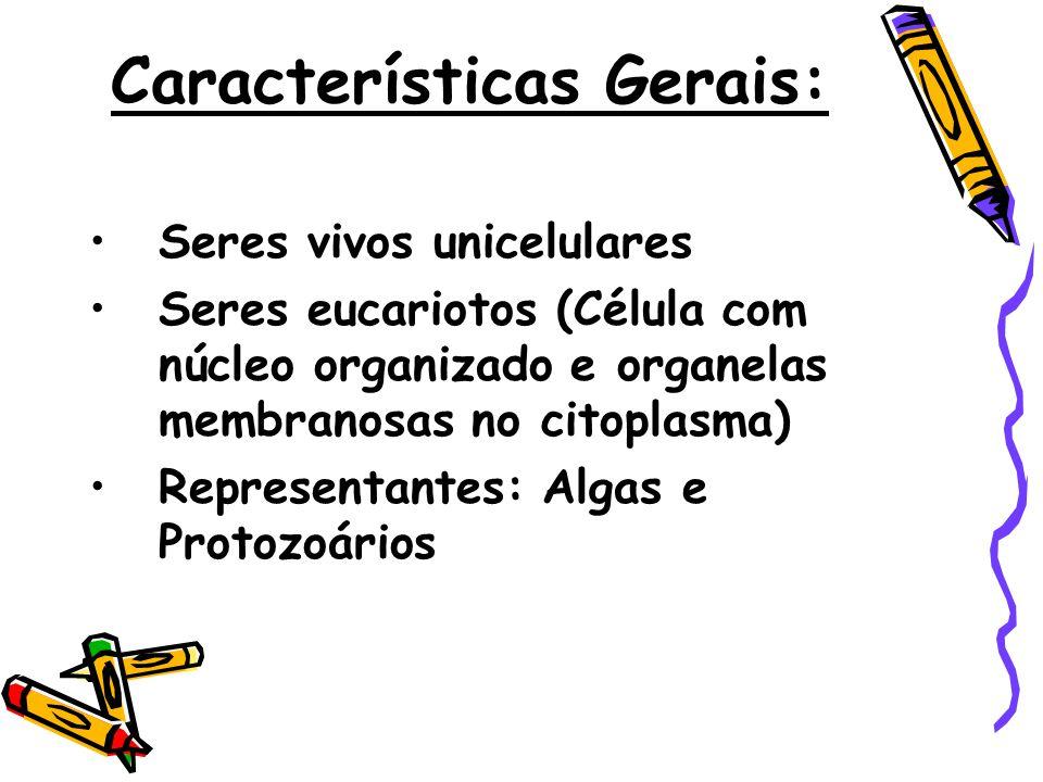 Características Gerais: •Seres vivos unicelulares •Seres eucariotos (Célula com núcleo organizado e organelas membranosas no citoplasma) •Representant