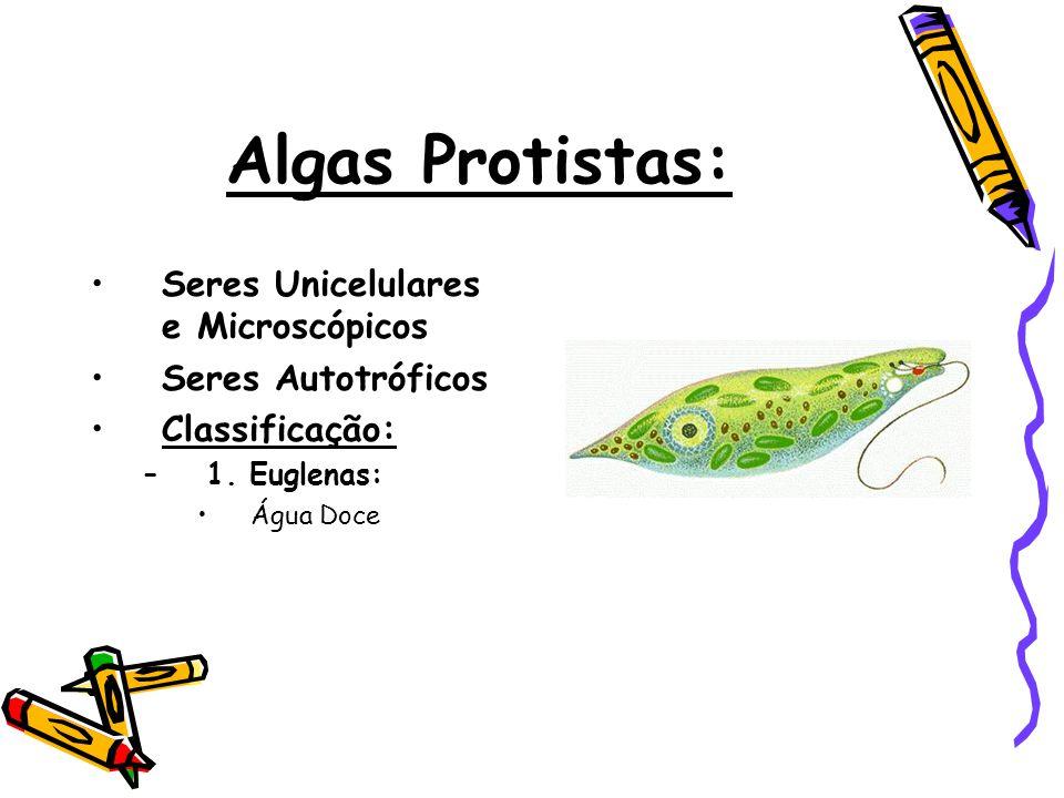 Algas Protistas: •Seres Unicelulares e Microscópicos •Seres Autotróficos •Classificação: –1. Euglenas: •Água Doce