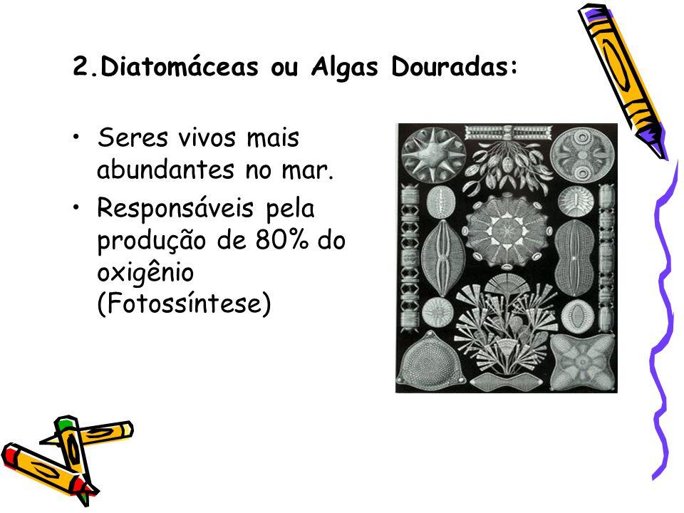 2.Diatomáceas ou Algas Douradas: •Seres vivos mais abundantes no mar. •Responsáveis pela produção de 80% do oxigênio (Fotossíntese)
