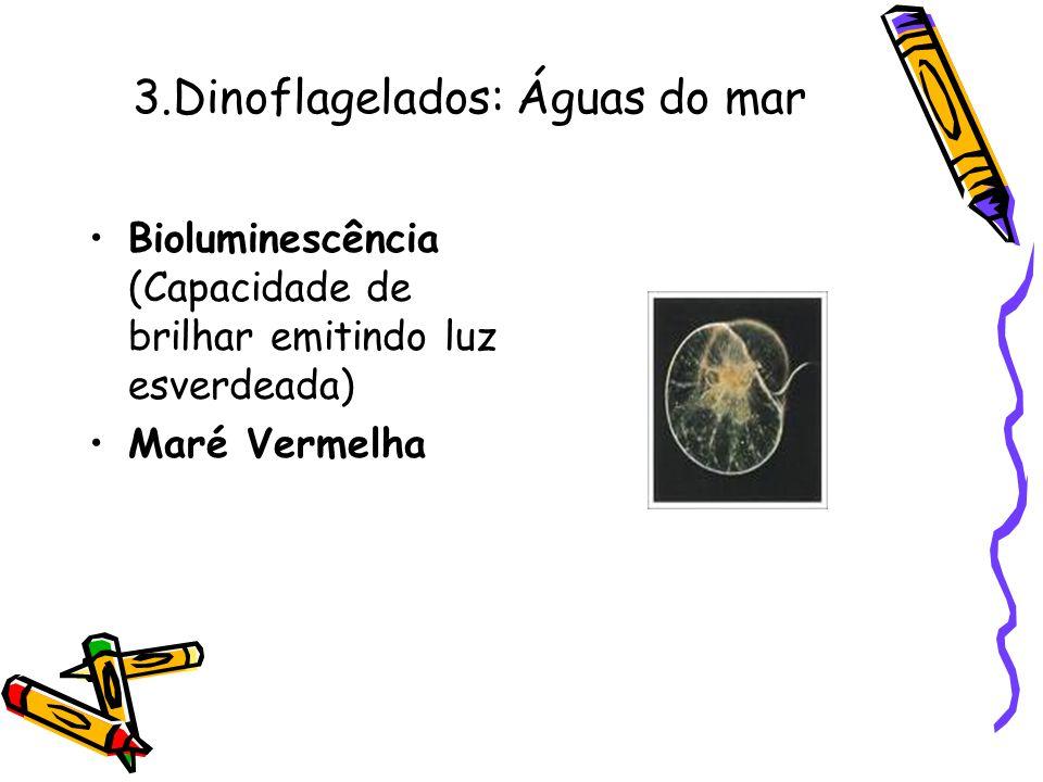 3.Dinoflagelados: Águas do mar •Bioluminescência (Capacidade de brilhar emitindo luz esverdeada) •Maré Vermelha