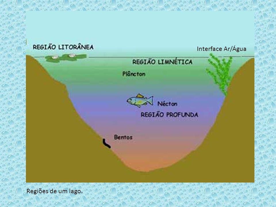 Regiões de um lago. Interface Ar/Água