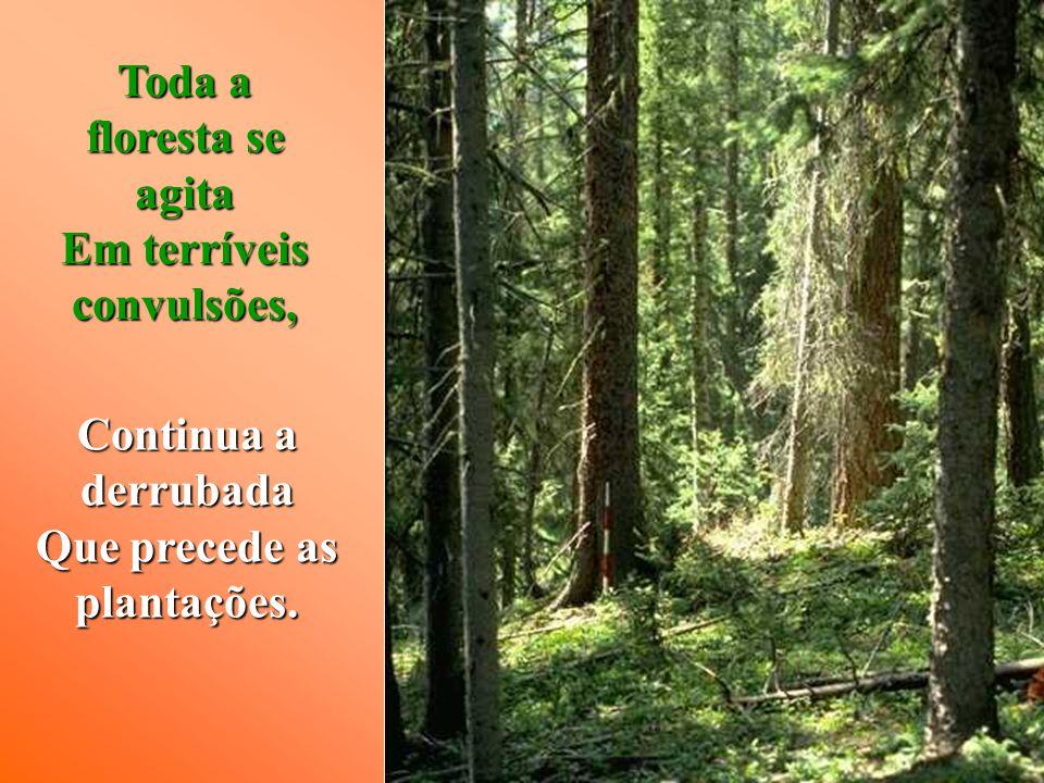 Toda a floresta se agita Em terríveis convulsões, Continua a derrubada Que precede as plantações.