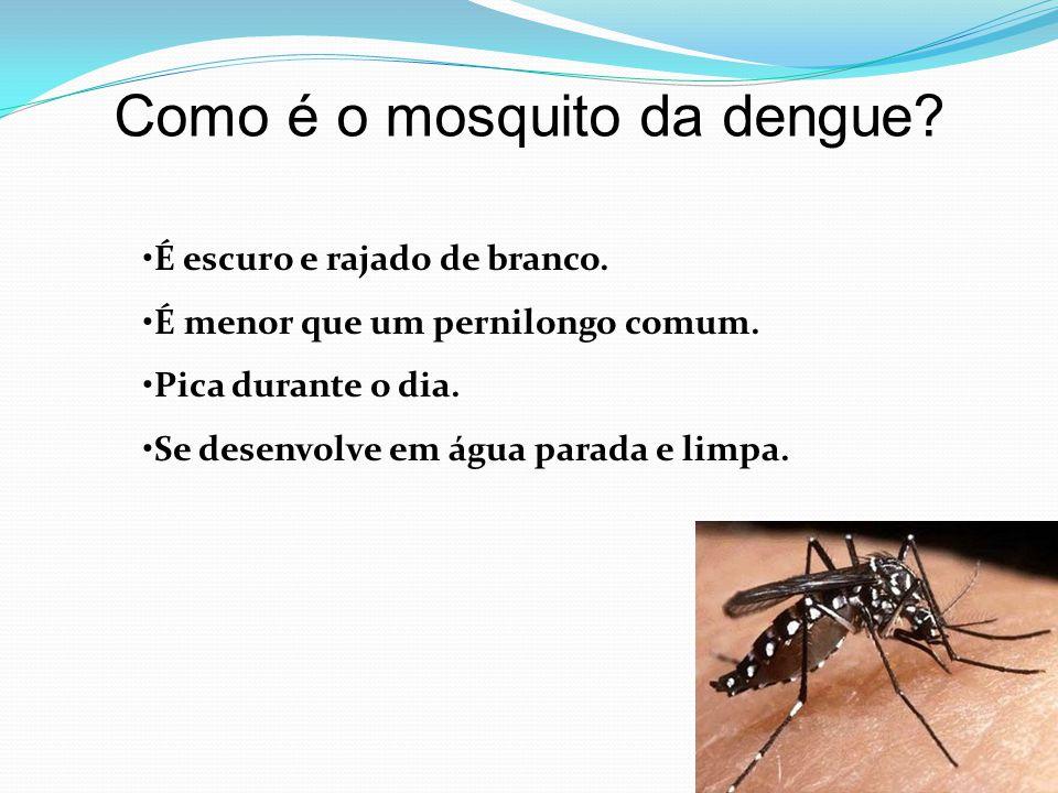 Como é o mosquito da dengue? •É escuro e rajado de branco. •É menor que um pernilongo comum. •Pica durante o dia. •Se desenvolve em água parada e limp