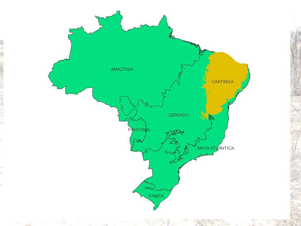 - Área: ≈ 1.000.000 km 2 ; - Precipitação: 700 bilhões de m 3 /ano; - Vegetação de Caatinga, típica da depressão sertaneja; - Solos predominantemente rasos, baixa fertilidade; - População: ≈ 23 milhões de hab.