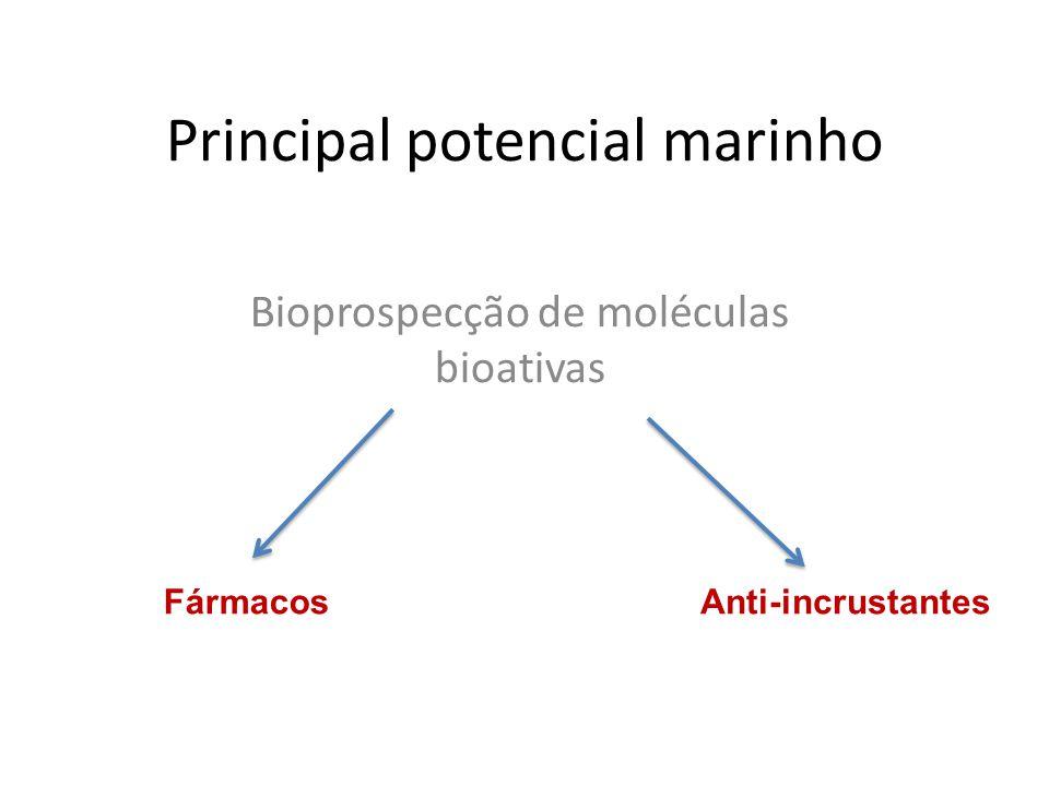 Principal potencial marinho Bioprospecção de moléculas bioativas FármacosAnti-incrustantes