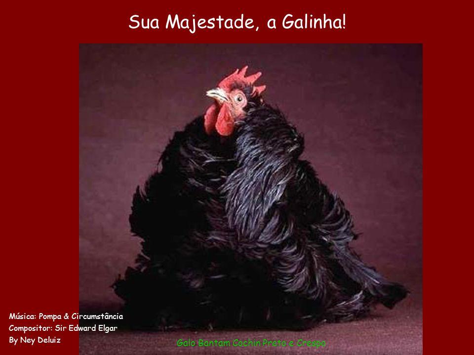 Schon mal solche Hühner gesehen?