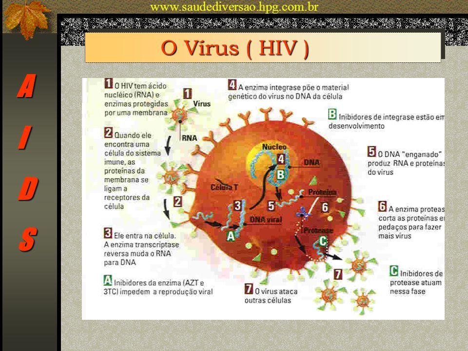 AIDS O Vírus ( HIV ) www.saudediversao.hpg.com.br