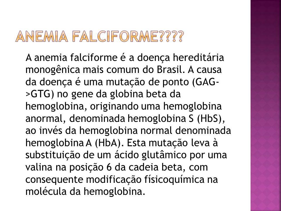 A anemia falciforme é a doença hereditária monogênica mais comum do Brasil. A causa da doença é uma mutação de ponto (GAG- >GTG) no gene da globina be