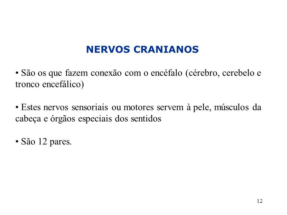 12 NERVOS CRANIANOS • São os que fazem conexão com o encéfalo (cérebro, cerebelo e tronco encefálico) • Estes nervos sensoriais ou motores servem à pele, músculos da cabeça e órgãos especiais dos sentidos • São 12 pares.