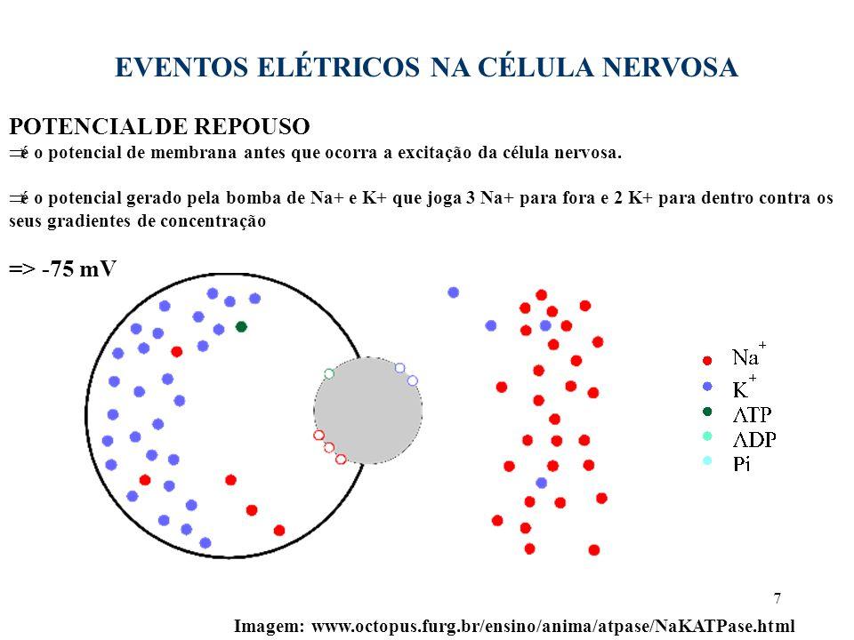 7 EVENTOS ELÉTRICOS NA CÉLULA NERVOSA POTENCIAL DE REPOUSO  é o potencial de membrana antes que ocorra a excitação da célula nervosa.