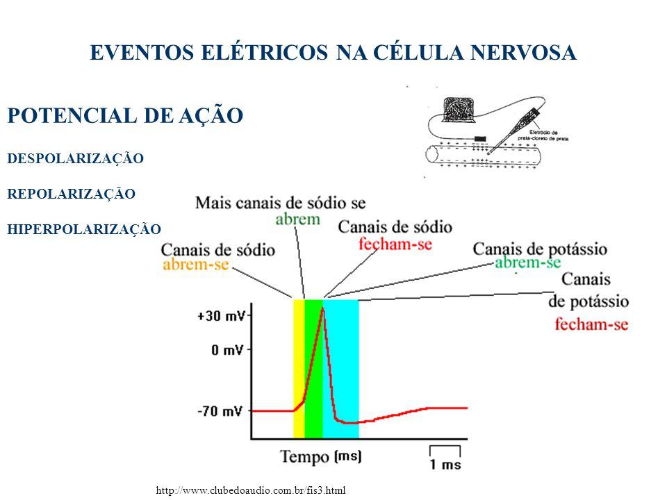 8 EVENTOS ELÉTRICOS NA CÉLULA NERVOSA POTENCIAL DE AÇÃO http://www.clubedoaudio.com.br/fis3.html DESPOLARIZAÇÃO REPOLARIZAÇÃO HIPERPOLARIZAÇÃO