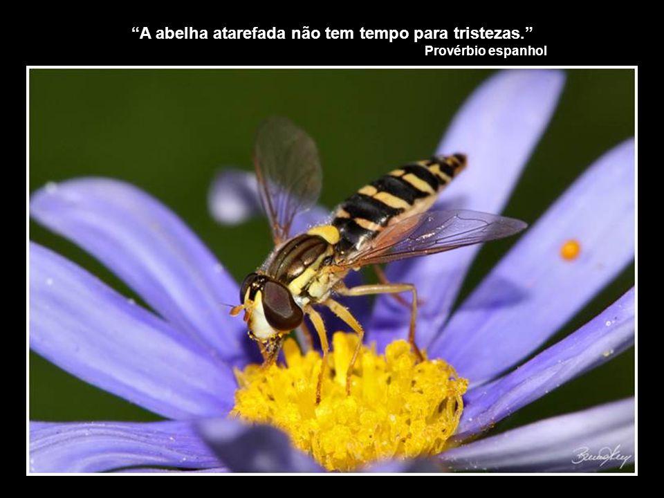 A abelha atarefada não tem tempo para tristezas. Provérbio espanhol