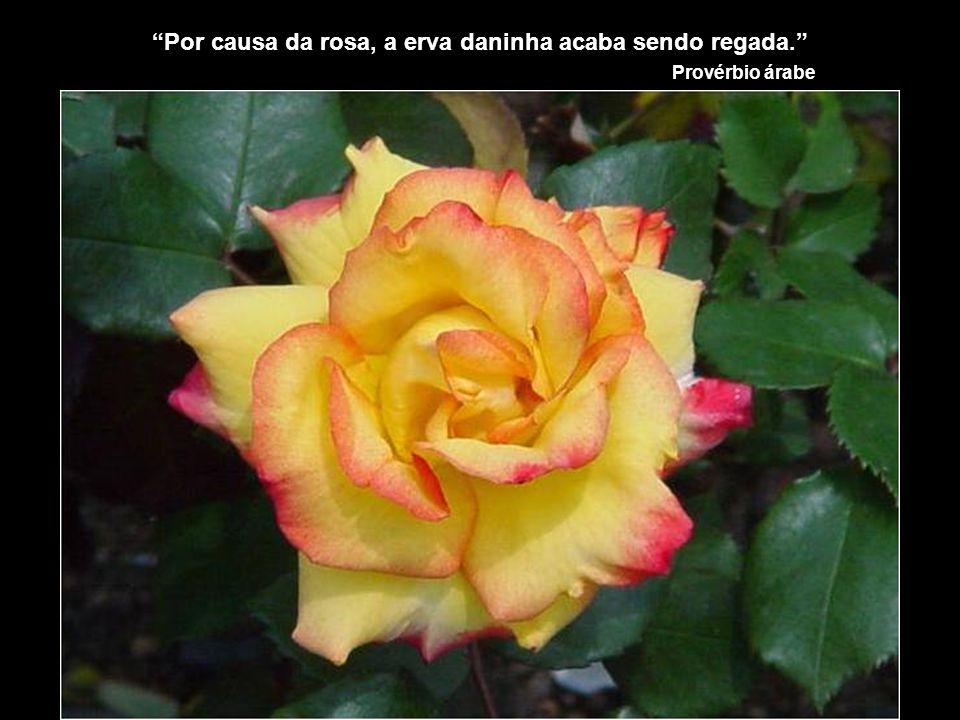 Por causa da rosa, a erva daninha acaba sendo regada. Provérbio árabe