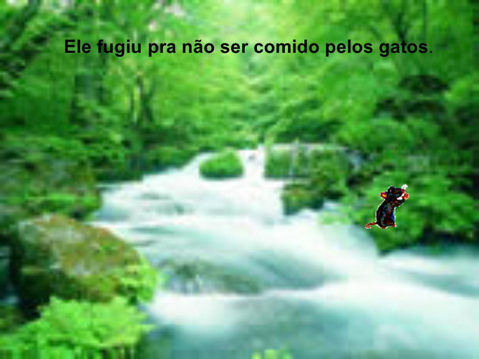 PAULO GUILHERME e PEDRO HENRIQUE 303