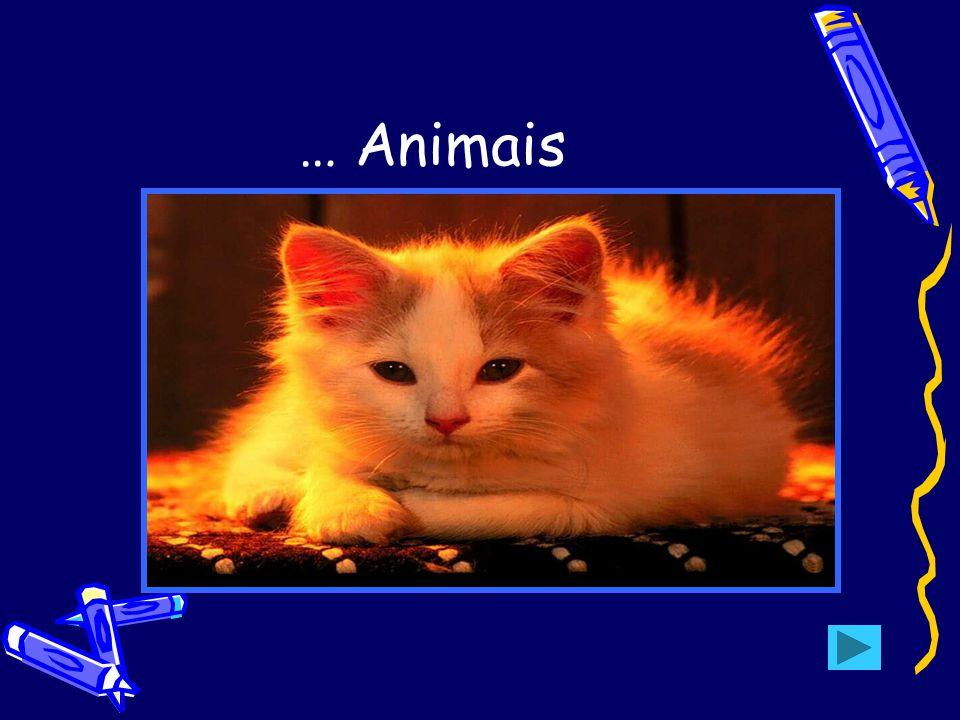 … Animais