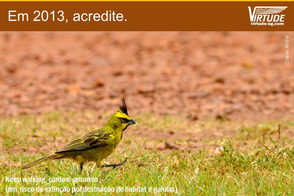 Em 2013, acredite. Keep walking, cardeal-amarelo (em risco de extinção por destruição de habitat e gaiolas) Cristian Andrei