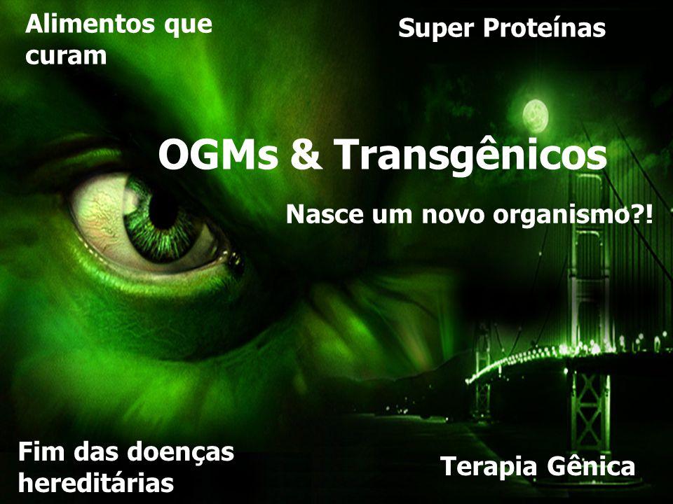 NASCE UM TRANSGÊNICO Nasce um novo organismo?! Super Proteínas Terapia Gênica Fim das doenças hereditárias Alimentos que curam OGMs & Transgênicos