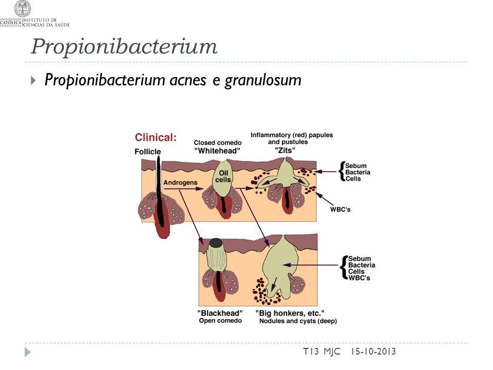 Propionibacterium  Propionibacterium acnes e granulosum 15-10-2013T13 MJC