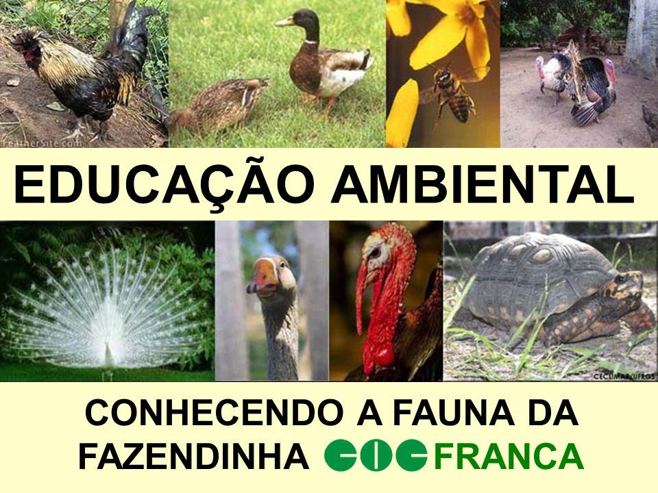 EDUCAÇÃO AMBIENTAL CONHECENDO A FAUNA DA FAZENDINHA FRANCA