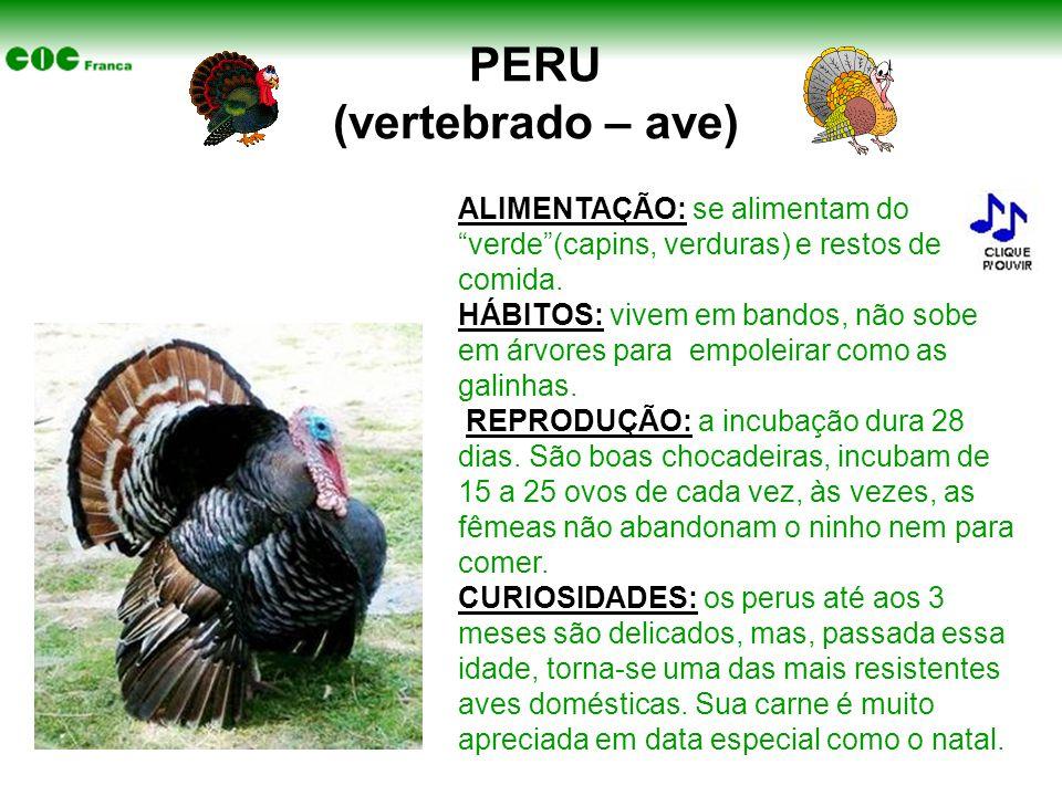 """PERU (vertebrado – ave) ALIMENTAÇÃO: se alimentam do """"verde""""(capins, verduras) e restos de comida. HÁBITOS: vivem em bandos, não sobe em árvores para"""