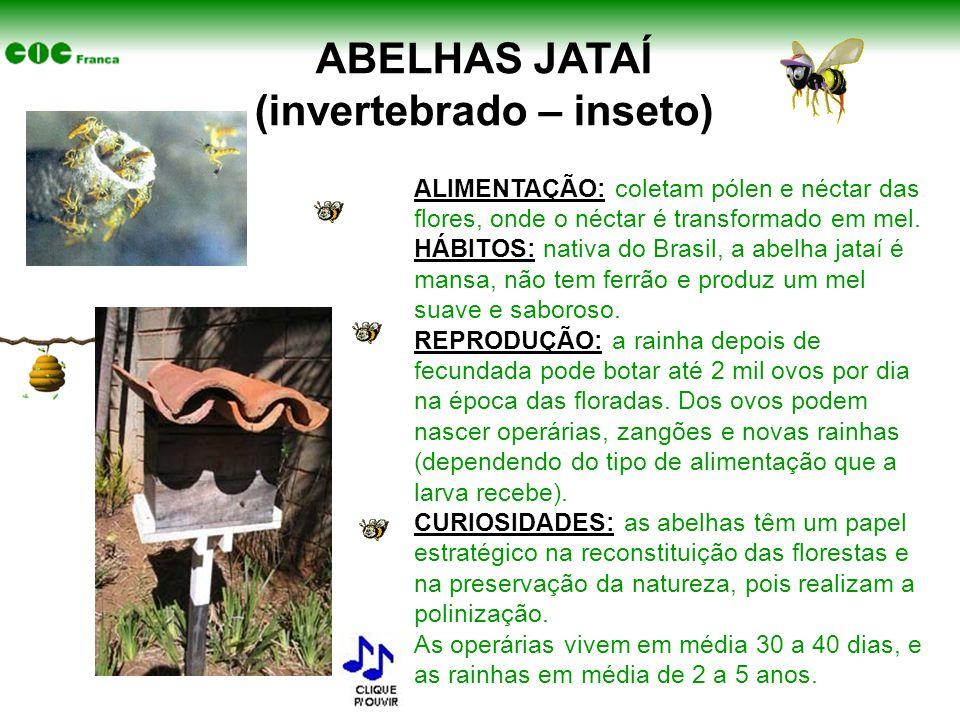 ABELHAS JATAÍ (invertebrado – inseto) ALIMENTAÇÃO: coletam pólen e néctar das flores, onde o néctar é transformado em mel. HÁBITOS: nativa do Brasil,