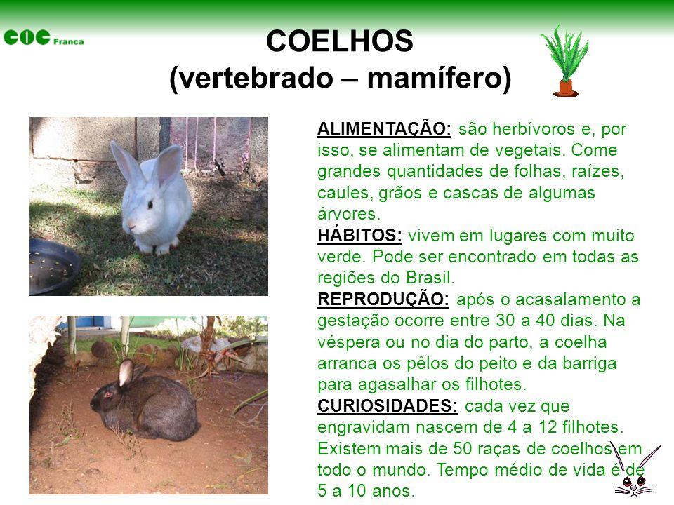 COELHOS (vertebrado – mamífero) ALIMENTAÇÃO: são herbívoros e, por isso, se alimentam de vegetais. Come grandes quantidades de folhas, raízes, caules,
