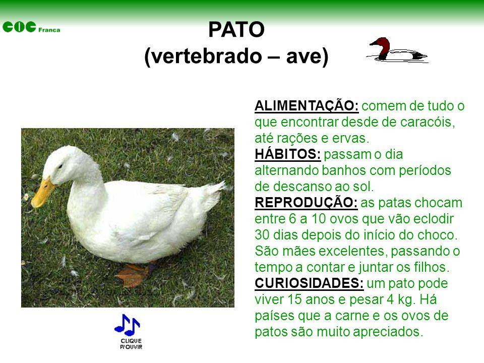 PATO (vertebrado – ave) ALIMENTAÇÃO: comem de tudo o que encontrar desde de caracóis, até rações e ervas.