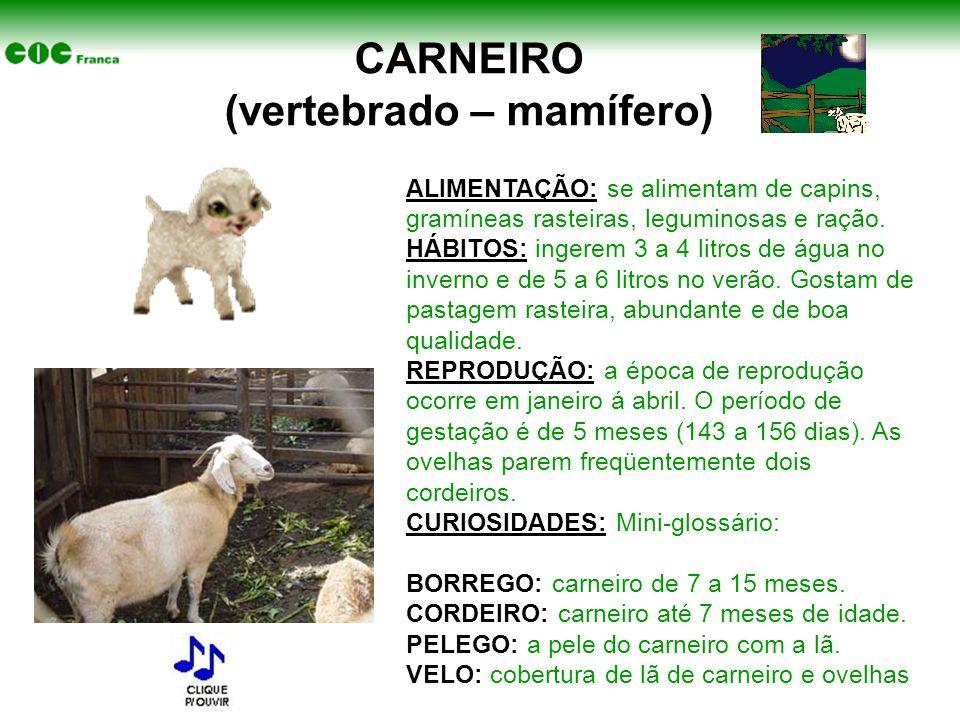 CARNEIRO (vertebrado – mamífero) ALIMENTAÇÃO: se alimentam de capins, gramíneas rasteiras, leguminosas e ração. HÁBITOS: ingerem 3 a 4 litros de água