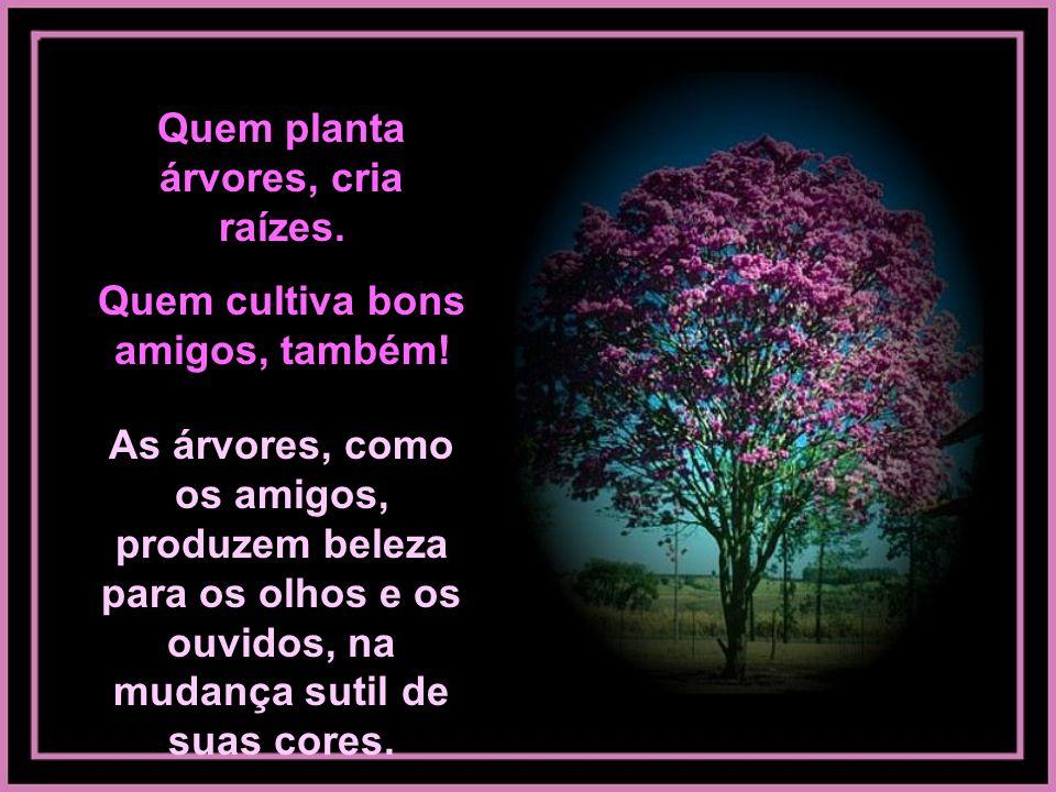Dizem os chineses: árvore plantada com amor, nenhum vento derruba! UMA VERDADEIRA AMIZADE, TAMBÉM!