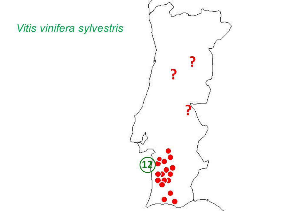 ? ? ? 12 Vitis vinifera sylvestris